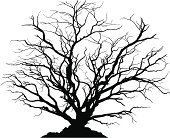 Detailed silhouette of a round deciduous tree with no leaves.