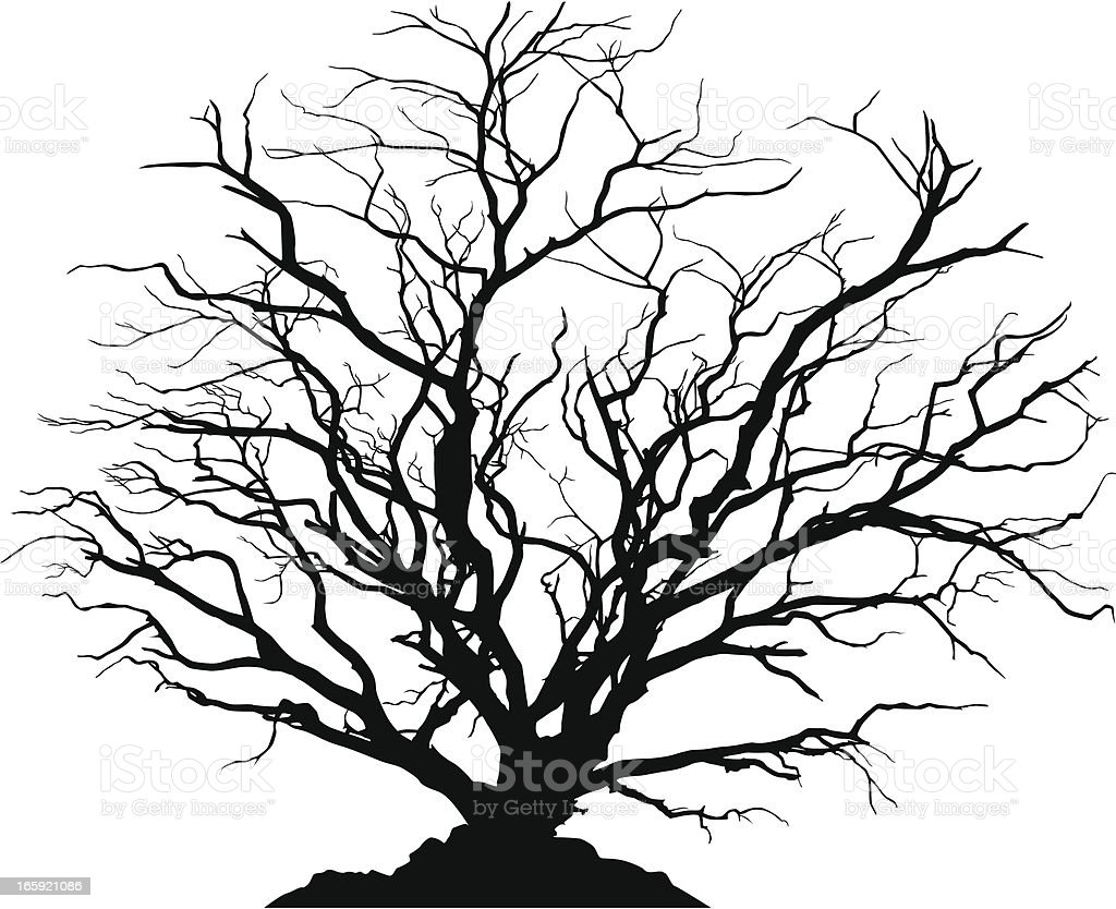 Detailed silhouette of a round deciduous tree with no leaves. vector art illustration