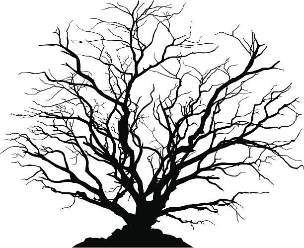 detaillierte silhouette einer runde laubbaum ohne blätter. - winterruhe stock-grafiken, -clipart, -cartoons und -symbole