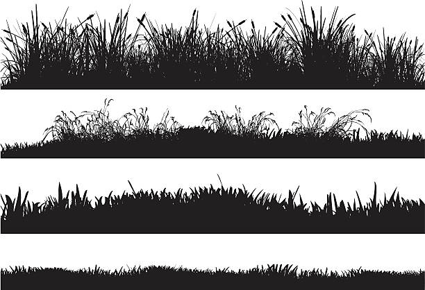 stockillustraties, clipart, cartoons en iconen met detailed silhouettes of different grass floors - grassenfamilie