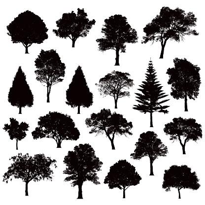 Detailed tree silhouettes - Illustration