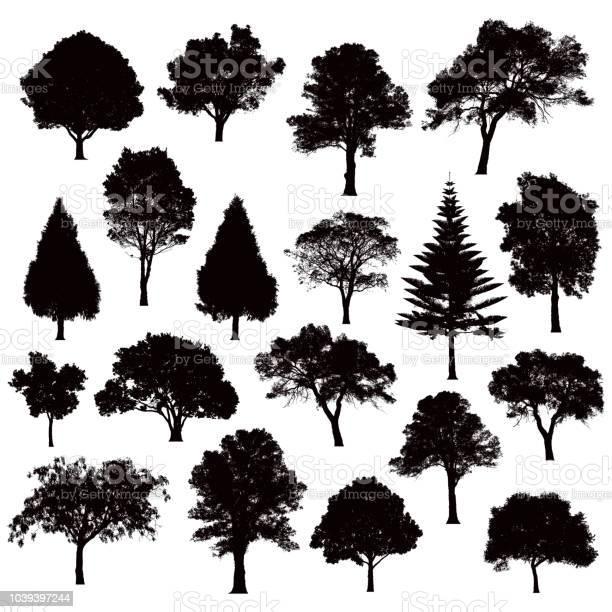 Detailed tree silhouettes illustration vector id1039397244?b=1&k=6&m=1039397244&s=612x612&h=vbsz3bbux0ya qrxsgogavw x9qcba77gxwecsc j7w=