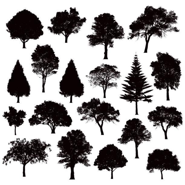 ilustraciones, imágenes clip art, dibujos animados e iconos de stock de siluetas de árbol detallado - ilustración - árbol