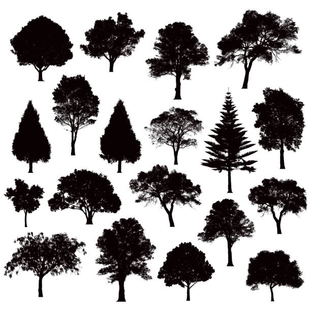 Detailed tree silhouettes - Illustration various black tree silhouettes in silhouette stock illustrations