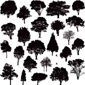Detailed black tree silhouettes of various trees around New Zealand
