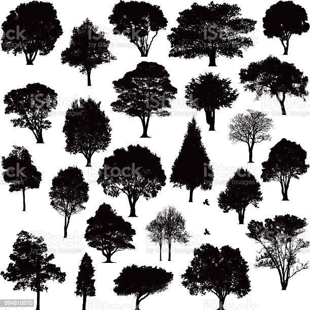 Detailed tree silhouettes vector id594910570?b=1&k=6&m=594910570&s=612x612&h=5bty5pwo291jiwfnh9xzsvfg6ywv5snetvslc3jexma=