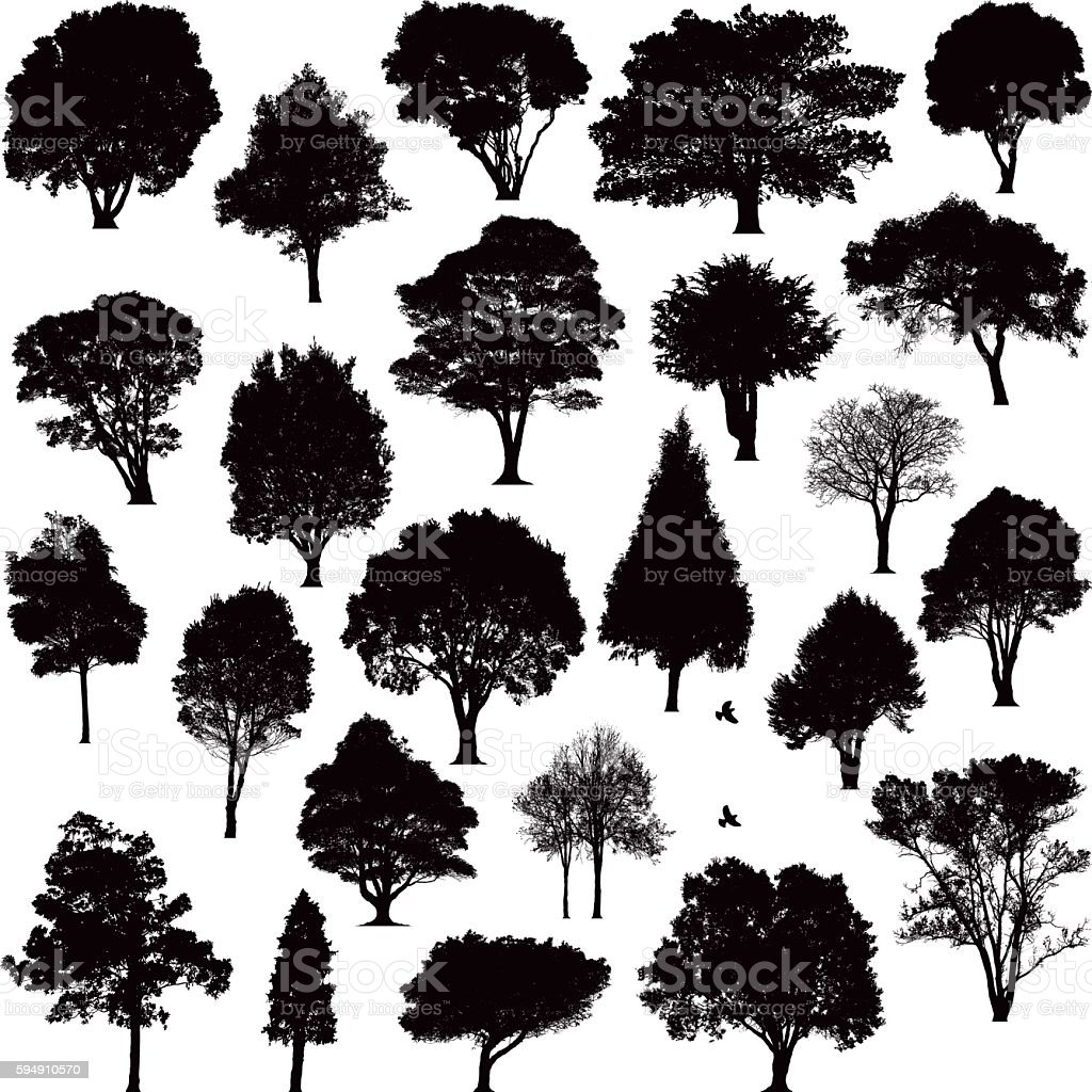 Detailed tree silhouettes vector art illustration