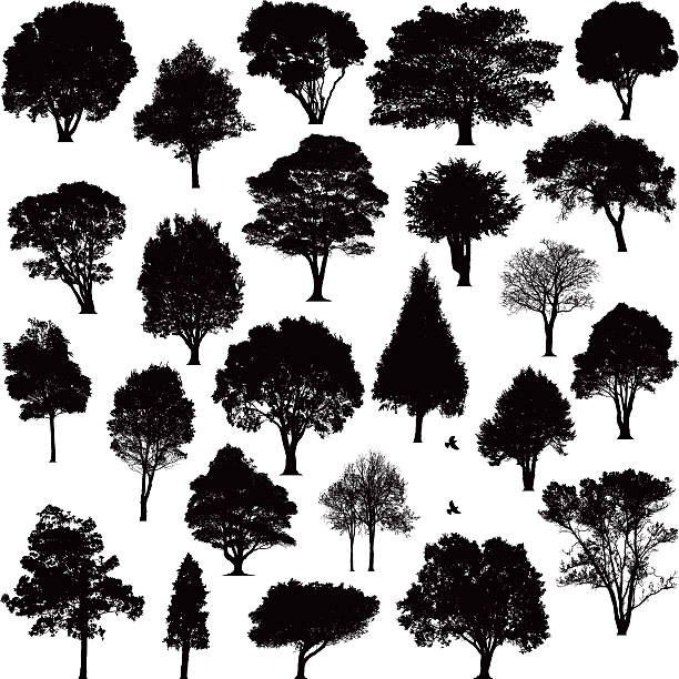 detailed tree silhouettes - trees stock illustrations