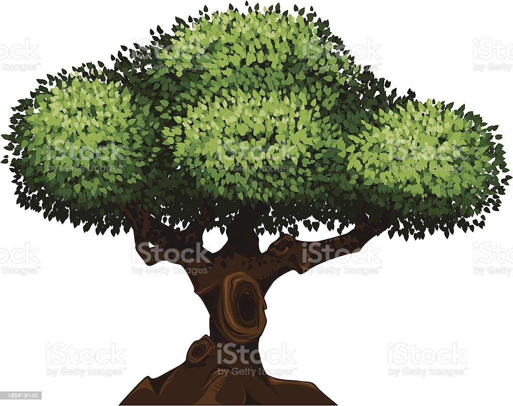 Detailed tree vector art illustration