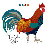 detailed vector image of gallic rooster with sign isolated on white backgound