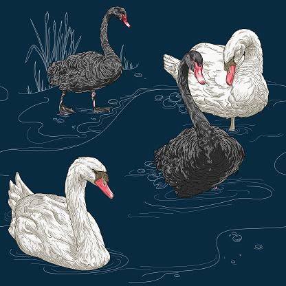 Detailed Vintage Elegant Swan Seamless Pattern