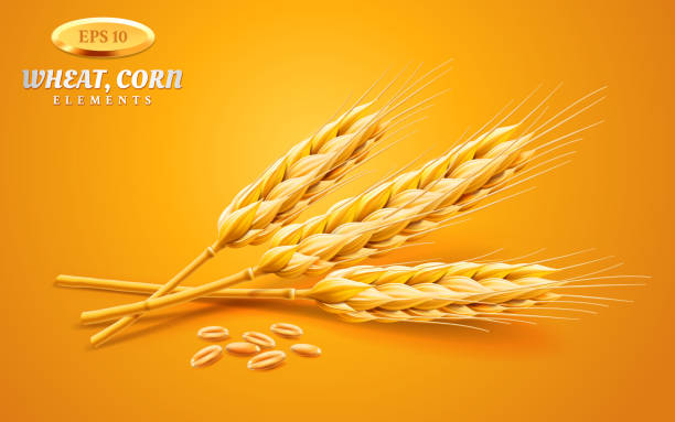 Detailed wheat ears, oats or barley isolated on a yellow background. Natural ingredient element. Healthy food or agriculture, bread or crop theme. Vector realistic 3d illustration Detailed wheat ears, oats or barley isolated on a yellow background. Natural ingredient element. Healthy food or agriculture, bread or crop theme. Vector realistic 3d illustration. bread backgrounds stock illustrations