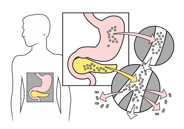 diabetes - enzyme stoffwechsel stock-grafiken, -clipart, -cartoons und -symbole