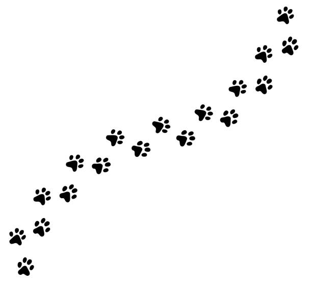 Diagonal vector cat, kitten foot trail, track, print. Paw print cat, dog, puppy pet vector cartoon black icon trace. Vector eps cute illustration. dog stock illustrations
