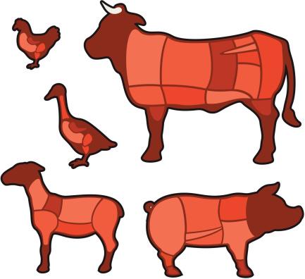 Diagram - cuts of meat