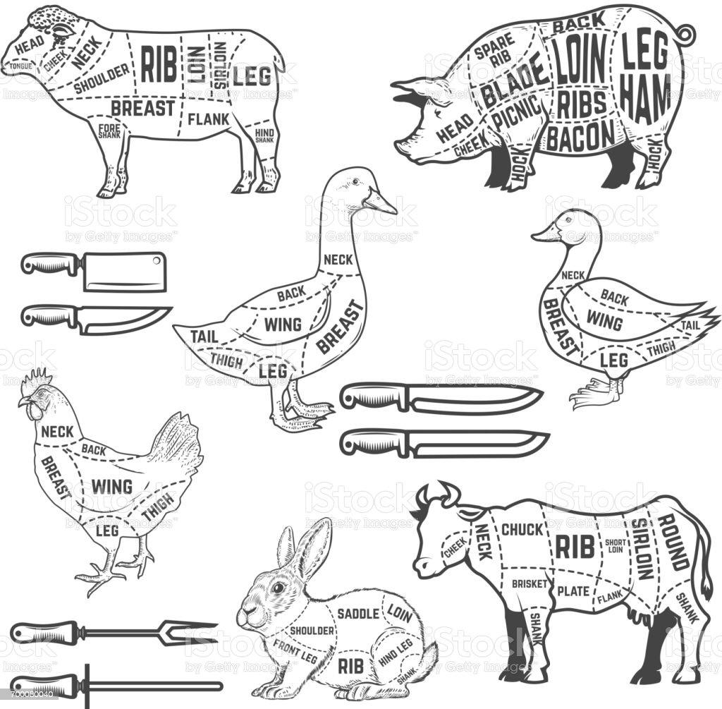 Guide de diagramme pour la viande de découpe d'agneau, OIE, porc, vache, lapin, canard, poulet. Éléments de design pour le menu, affiche, flyer restaurant. Illustration vectorielle - Illustration vectorielle