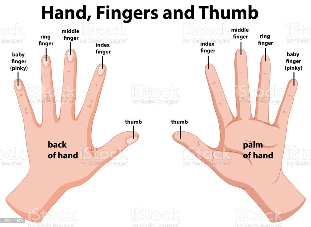 Human Hand Diagram Fingers Data Circuit Diagram