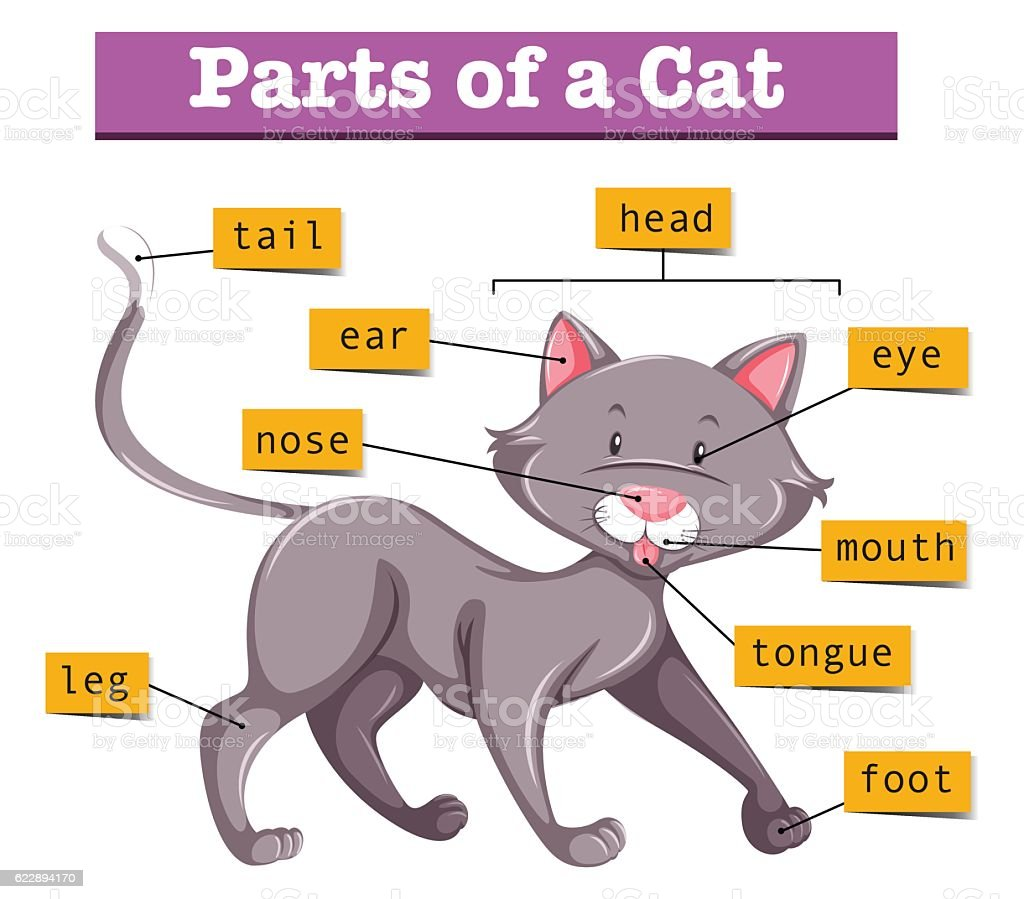 Cat Internal Parts Diagram - Residential Electrical Symbols •