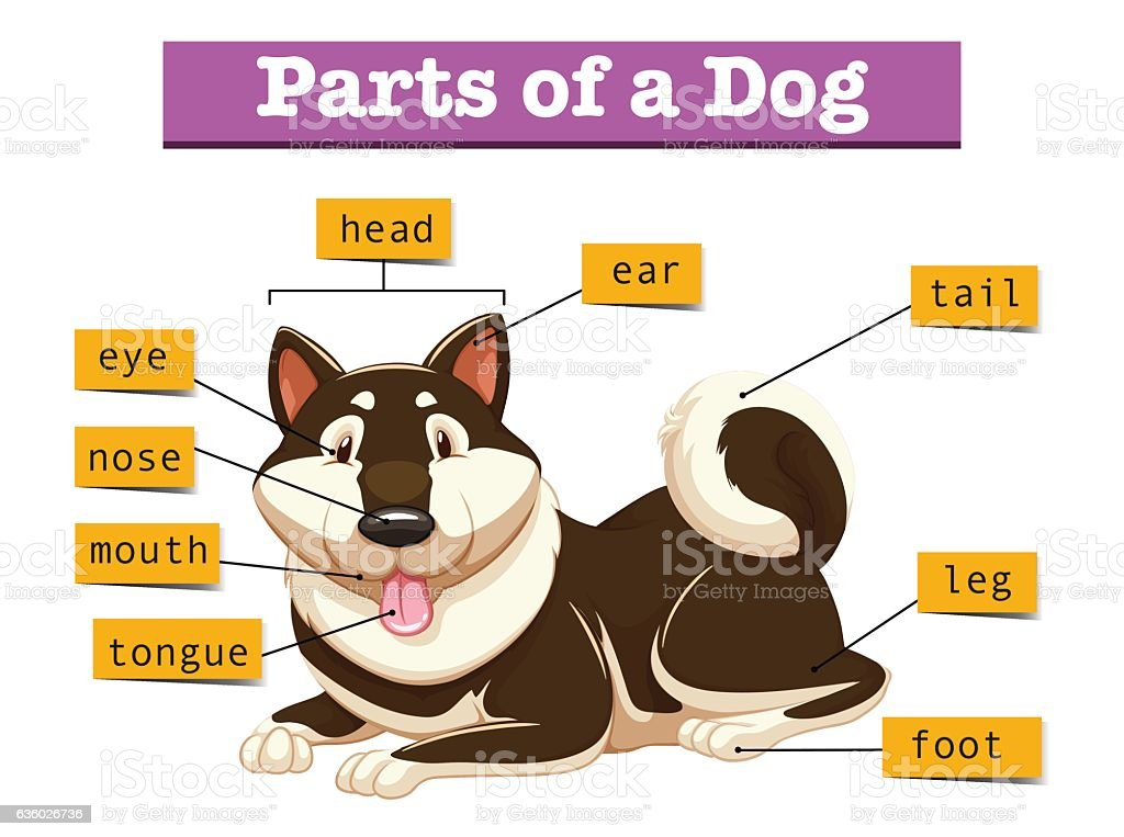 Diagram showing parts of dog stock vector art more images of diagram showing parts of dog royalty free diagram showing parts of dog stock vector art ccuart Choice Image