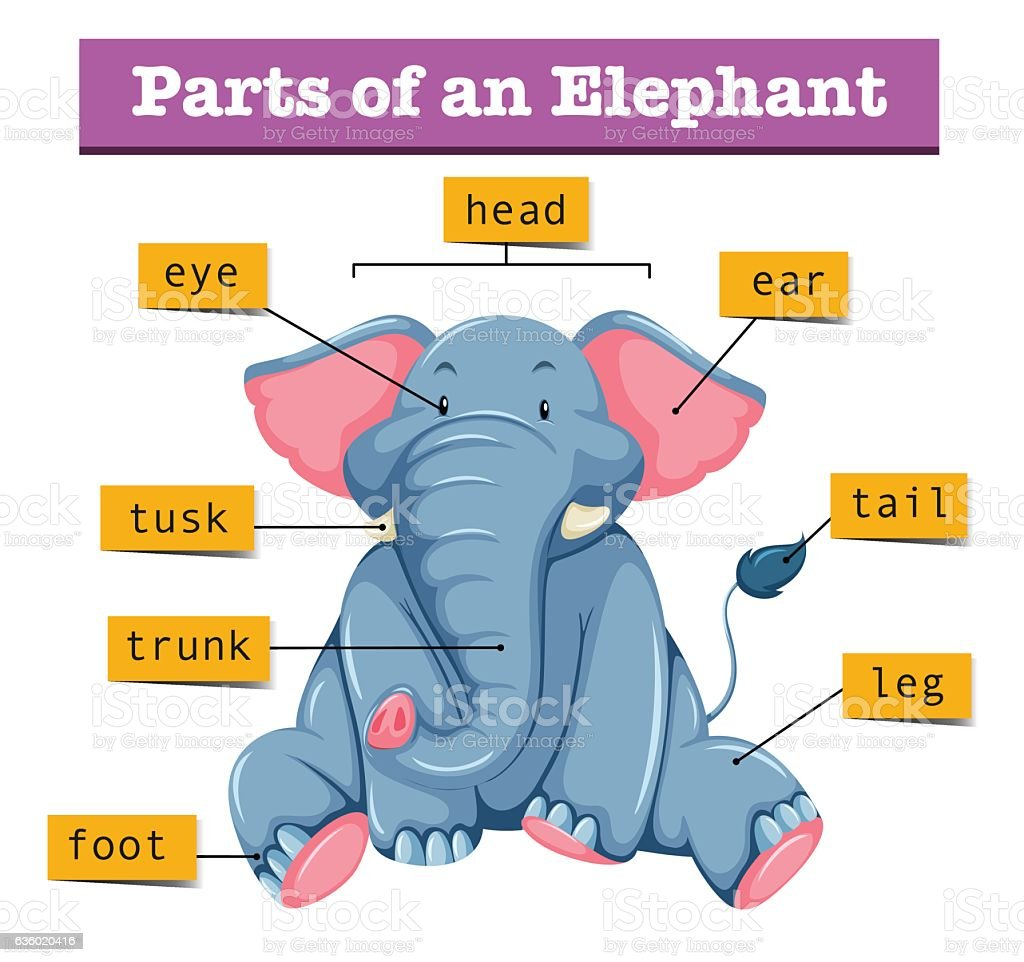 Diagram showing parts of elephant stock vector art more images of diagram showing parts of elephant royalty free diagram showing parts of elephant stock vector art ccuart Images