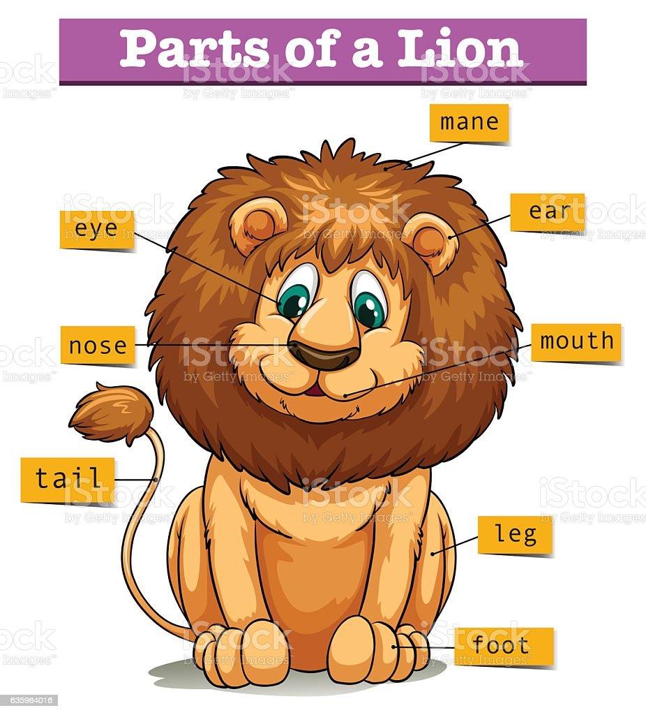 Internal Anatomy Diagram Of A Lions - House Wiring Diagram Symbols •
