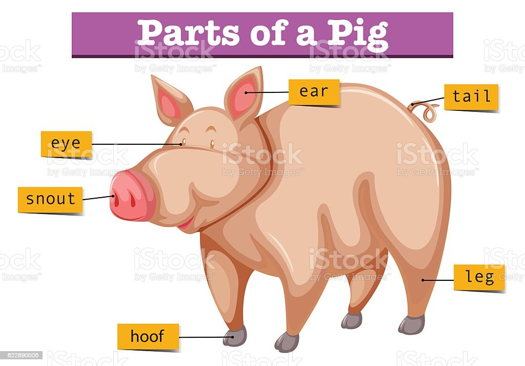 Parts Of The Pig Diagram - ~ Wiring Diagram Portal ~ •