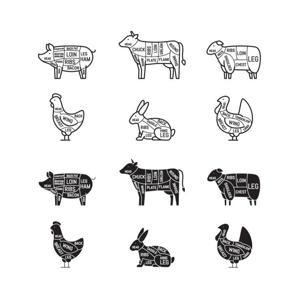 Diagrams for butcher shop. Meat cuts. Animal silhouette, pig, cow, lamb, chicken, turkey, rabbit. Vector illustration. Diagrams for butcher shop. Meat cuts. Animal silhouette, pig, cow, lamb, chicken, turkey, rabbit. Vector illustration. poultry stock illustrations