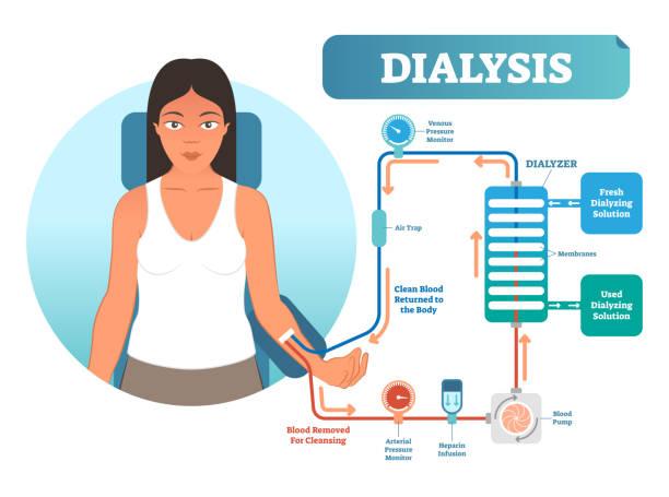 Royalty Free Clip Art Of Female Digestive System Diagram Clip Art ...