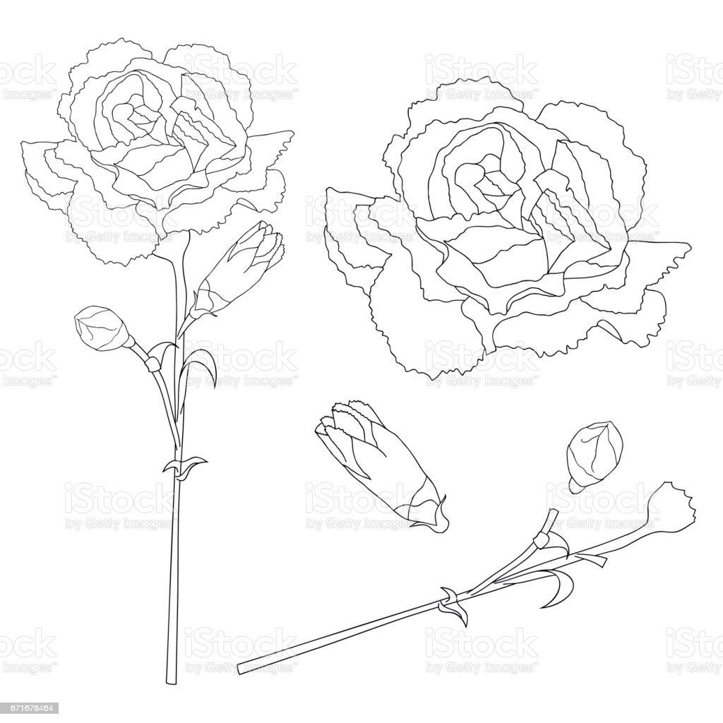 Dianthus caryophyllus Outline - Carnation Flower, Clove Pink. National flower of Spain, Monaco, and Slovenia. Vector Illustration.