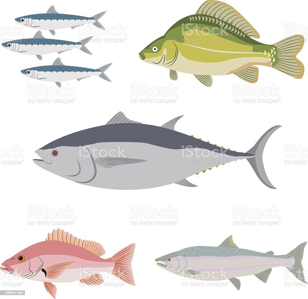 Difference kind of fish river and sea food stock vector for Fish and more