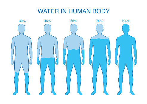 Difference Percentage Of Water In The Human Body Stock Illustration - Download Image Now