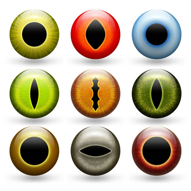 different animals eyes set - dragon eye stock illustrations, clip art, cartoons, & icons
