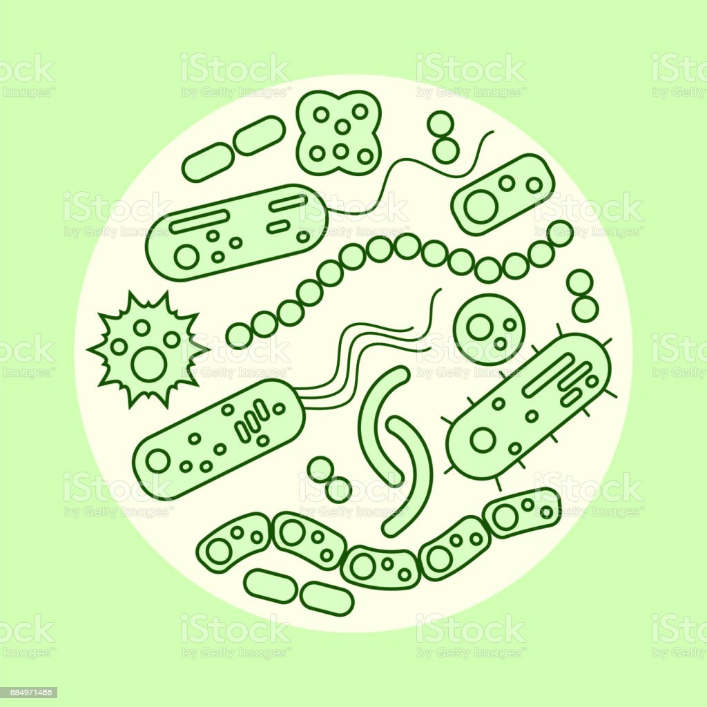 different bacteria in a circle vector art illustration