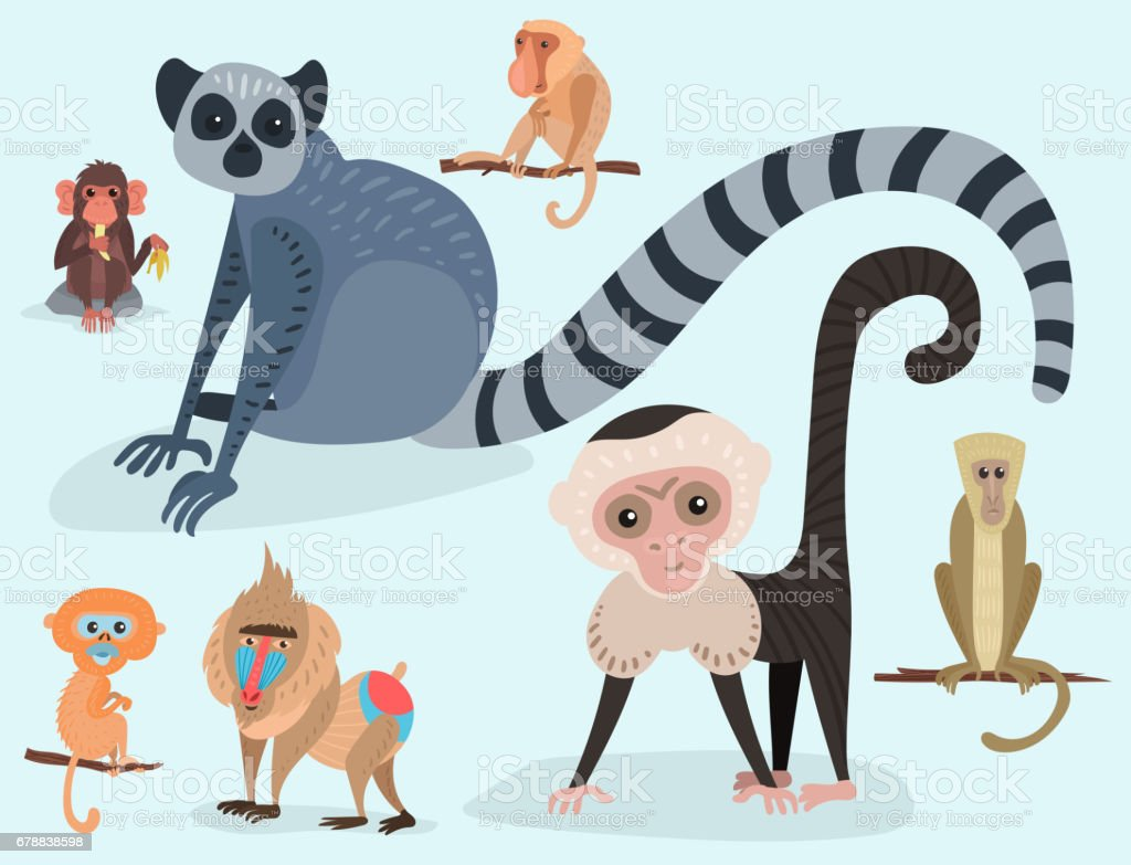 Different breads monkey character animal wild zoo ape chimpanzee vector illustration vector art illustration
