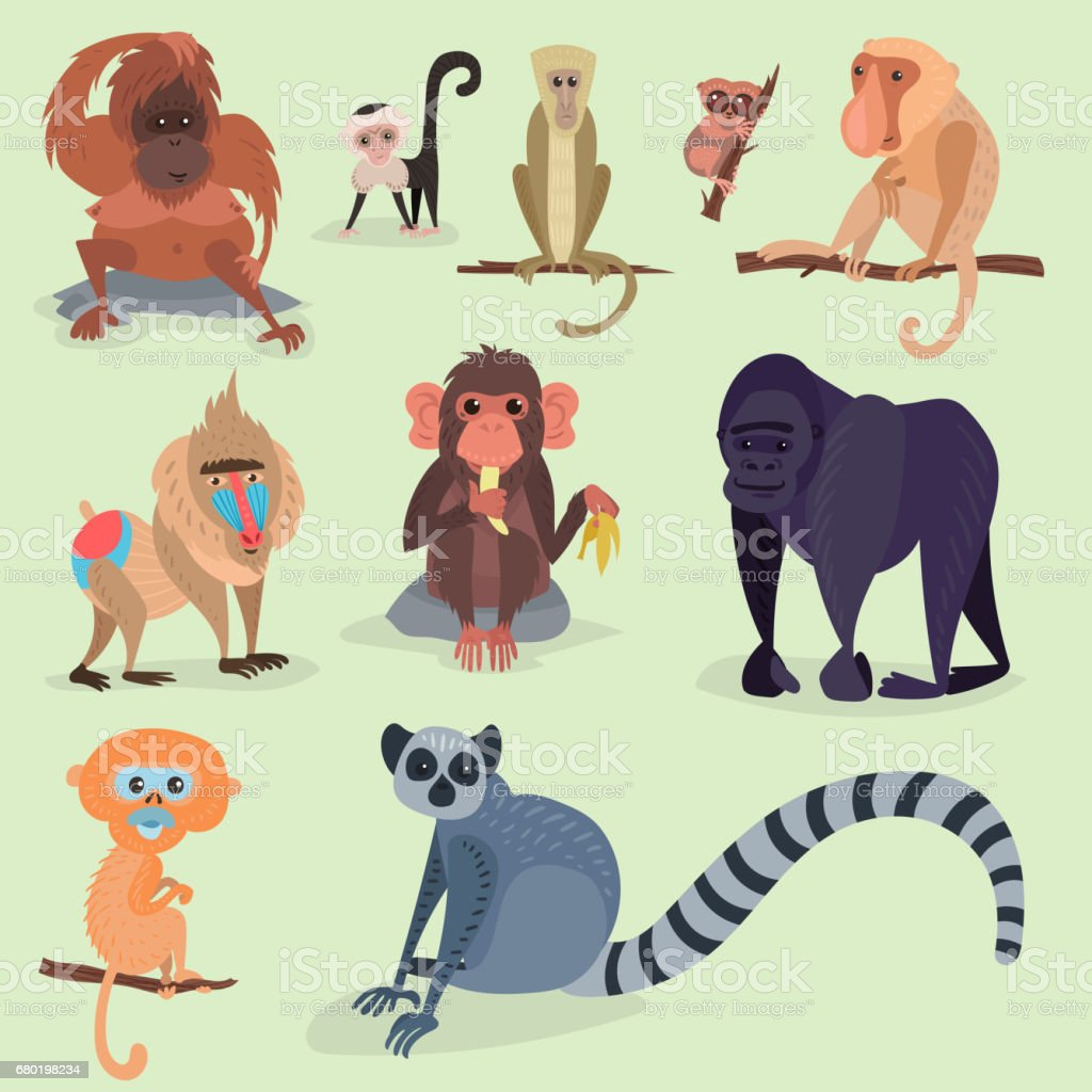 Verschiedene Brotsorten Affe Charakter Tier wild Zoo Affe Schimpanse Vektor-illustration – Vektorgrafik