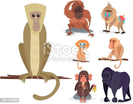 Different breads monkey character animal wild vector set illustration. Macaque nature primate cartoon wild zoo cheerful gorilla ape chimpanzee wildlife jungle animal.