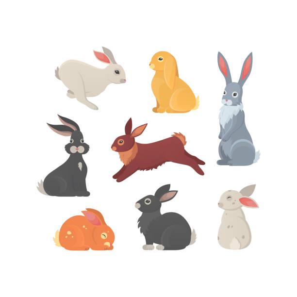 verschiedene rassen von niedlichen kaninchen vektorische illustration. - kaninchen stock-grafiken, -clipart, -cartoons und -symbole