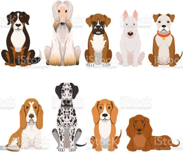 Different breeds of dog group of domestic animals in cartoon style vector id696543508?b=1&k=6&m=696543508&s=612x612&h=bdenglrf st7ucgopfrgvb kn gw5c4zu97hp81mgd4=