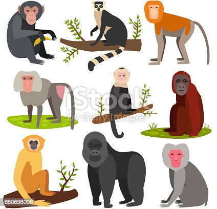 Different monkey character bread animal wild vector set illustration. Macaque nature primate cartoon wild zoo cheerful gorilla ape chimpanzee wildlife jungle animal.