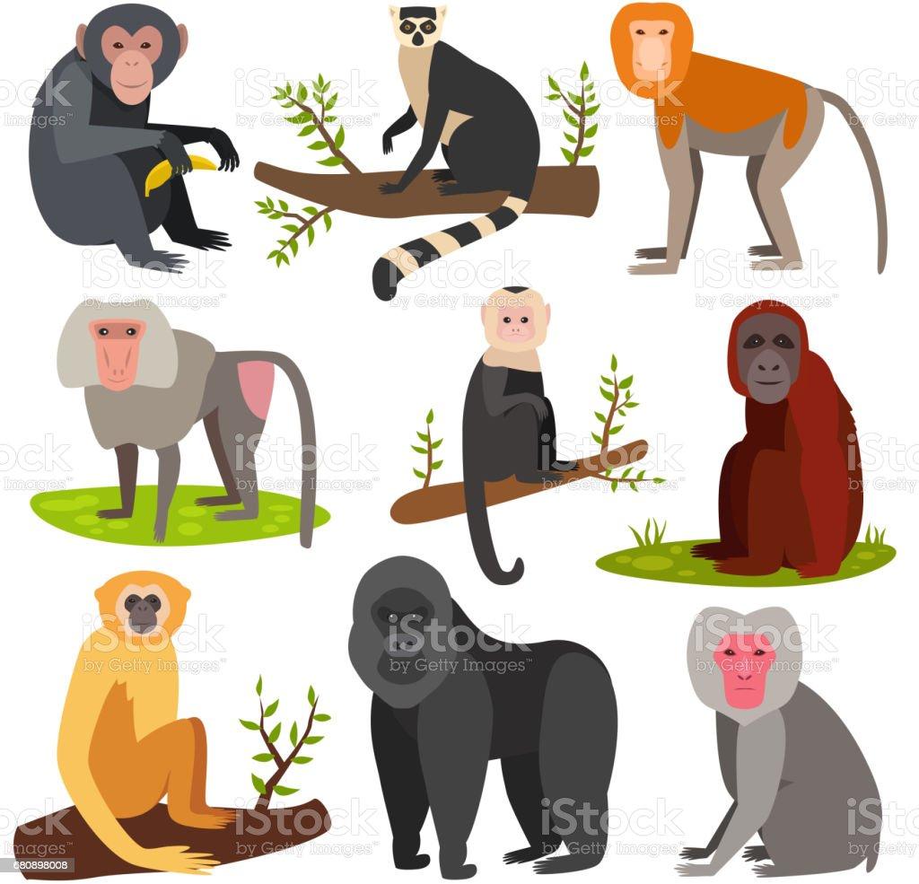 Verschiedene Cartoon Affen Rasse Charakter Tier wild Zoo Affe Schimpanse Vektor-illustration – Vektorgrafik