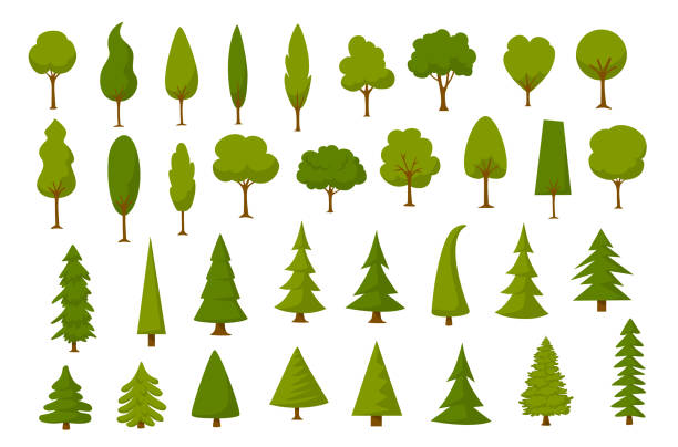 different cartoon park forest pine fir trees set - куст stock illustrations
