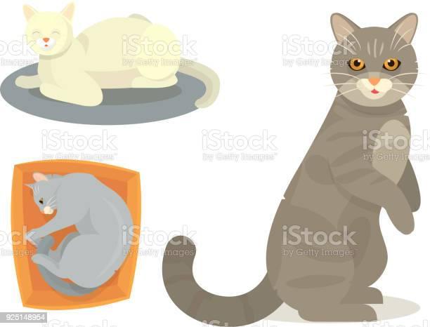 Different cat cute kitty pet cartoon cute animal cattish character vector id925148954?b=1&k=6&m=925148954&s=612x612&h=rz0bfkk1yjerfvalt1xaehyfuul3oz0oz6ae4g7ewyi=