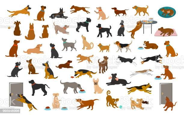 Different dog breeds and mixed set pets play running jumping eating vector id995948998?b=1&k=6&m=995948998&s=612x612&h=yyax5a0x4cg0papxzqng9okur2lrma06pafg slkj0c=