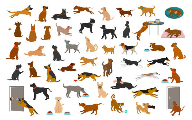 different dog breeds and mixed set, pets play running jumping eating sleeping, sit lay down and walk, steal food, bark, protect. different dog breeds and mixed set, pets play running jumping eating sleeping, sit lay down and walk, steal food, bark, protect. isolated  cartoon vector illustration graphic dog stock illustrations