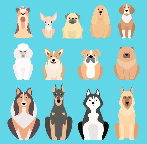 verschiedene hunde züchten isoliert vektor illustration silhouette haustier welpen tiere symbole - collie stock-grafiken, -clipart, -cartoons und -symbole