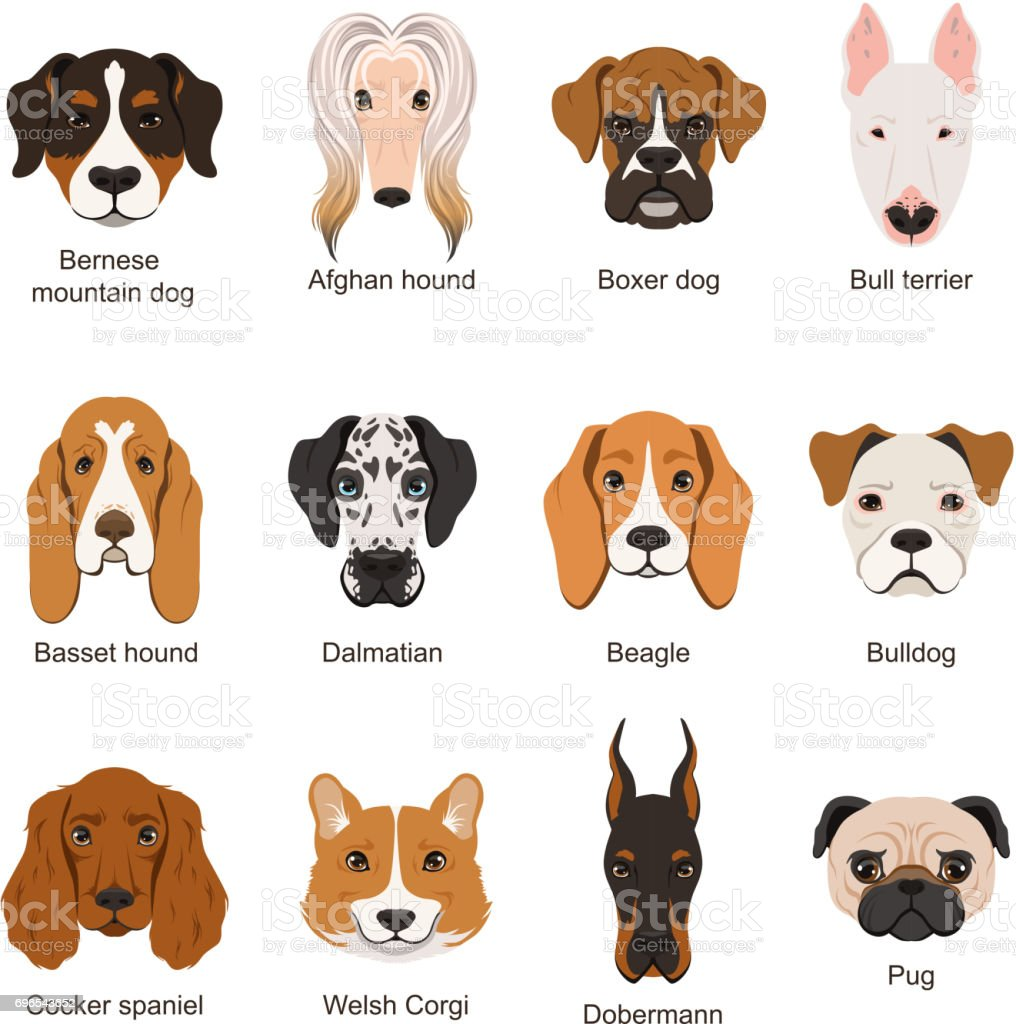 Different dogs. Vector illustrations set isolate on white vector art illustration