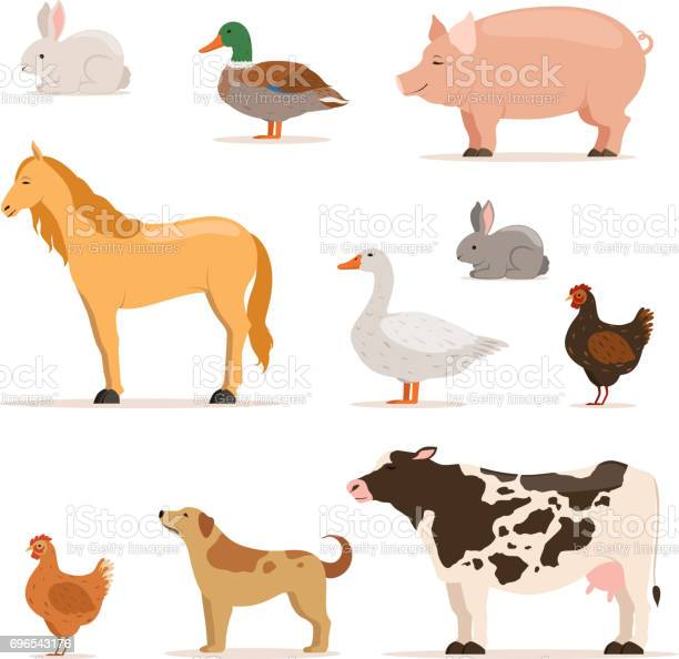 Different domestic animals on farm geese ducks hens chickens and vector id696543176?b=1&k=6&m=696543176&s=612x612&h=7kdaepghwusc9sxpwgsdyjvrmkmsi1fuujungfqmu9q=