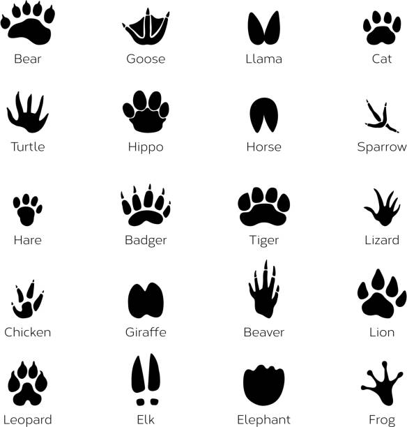 Different footprints of birds and animals. Vector monochrome pictures on white background Different footprints of birds and animals. Vector monochrome pictures on white background. Animal footprint track, black silhouette footprints illustration goose bird stock illustrations