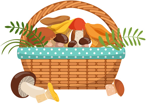 Different fresh mushrooms in basket. Vector illustrations set in cartoon style