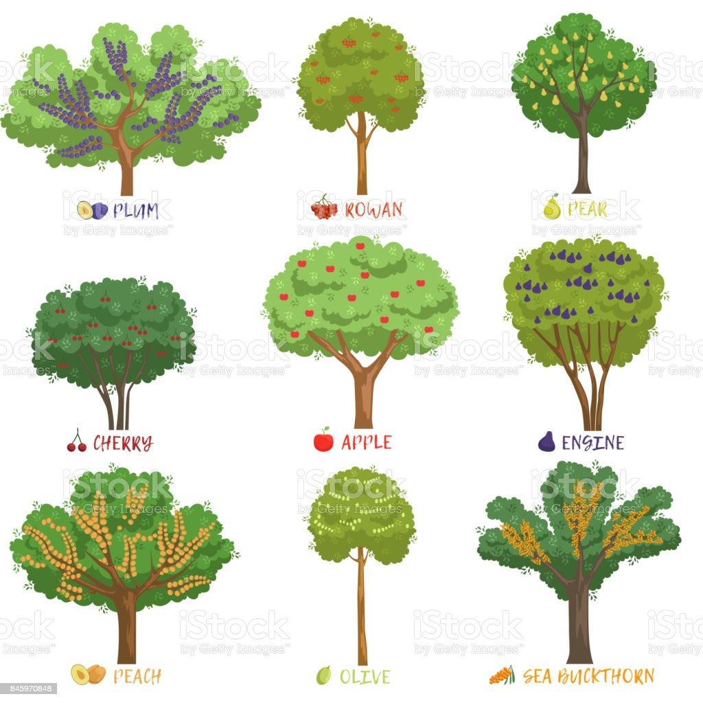 Ilustraci n de clases de rboles frutales con sistema de for Jardines con arboles y arbustos